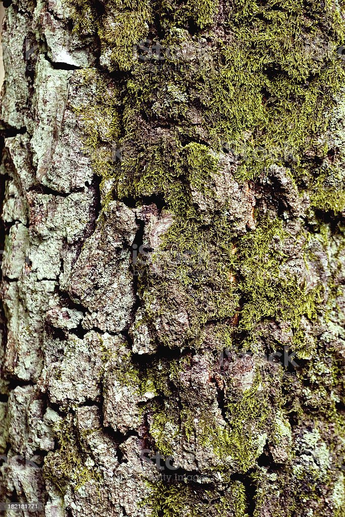 Grunge moss stock photo