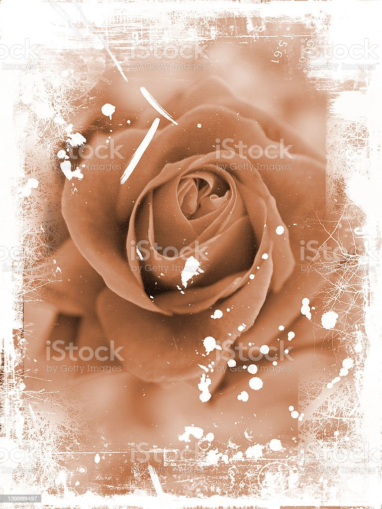 Grunge rose vector art illustration