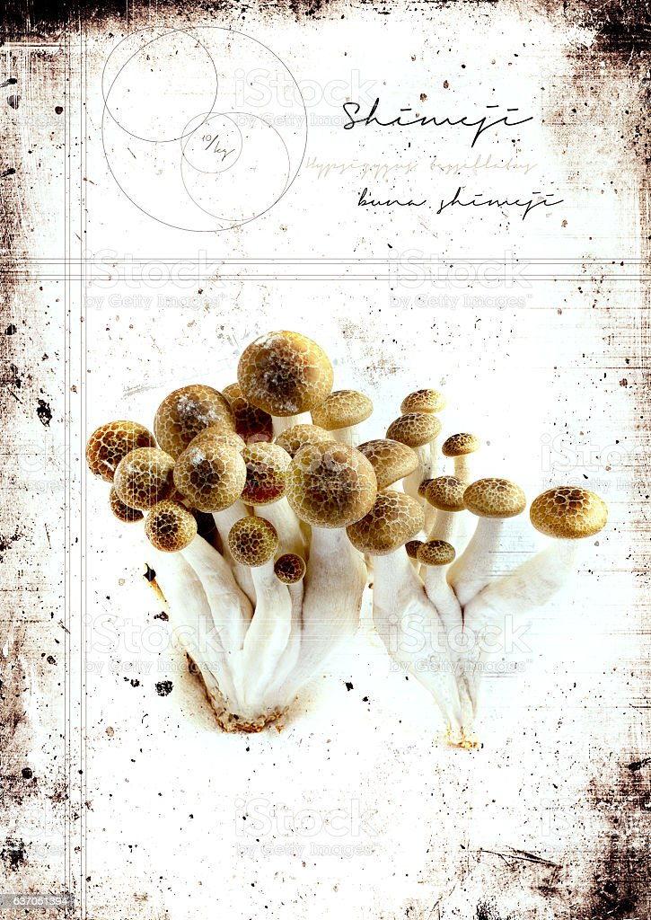 Grunge Shimeji Mushrooms stock photo