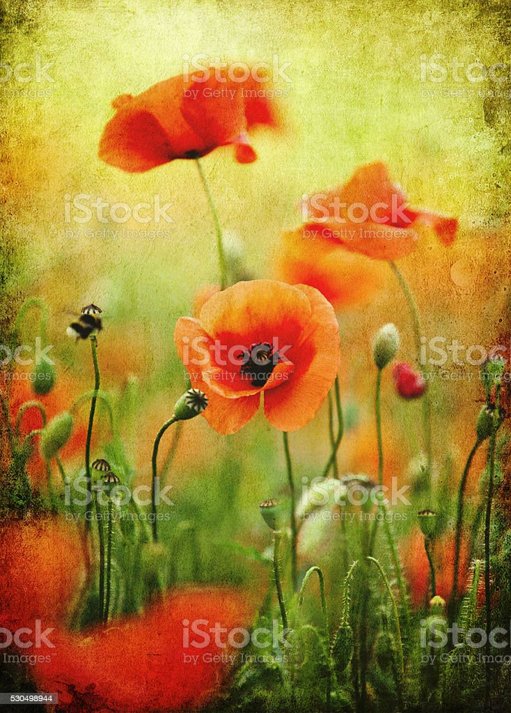 Grunge wild poppies, retro-style photo stock photo
