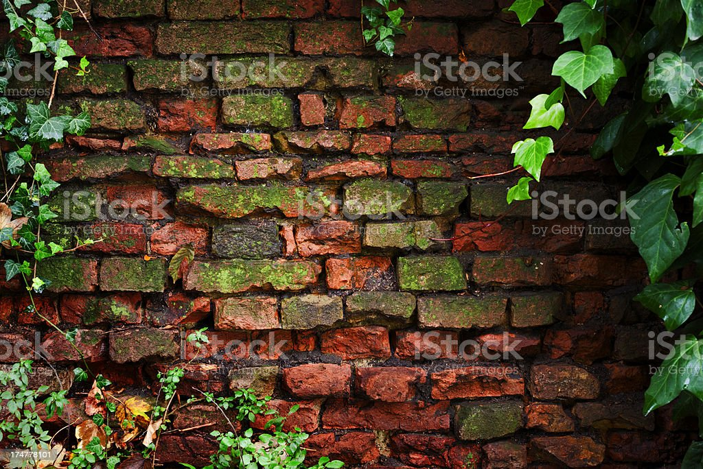 Grungy Old Overgrown Roman Wall Background Texture Framed by Ivy royalty-free stock photo