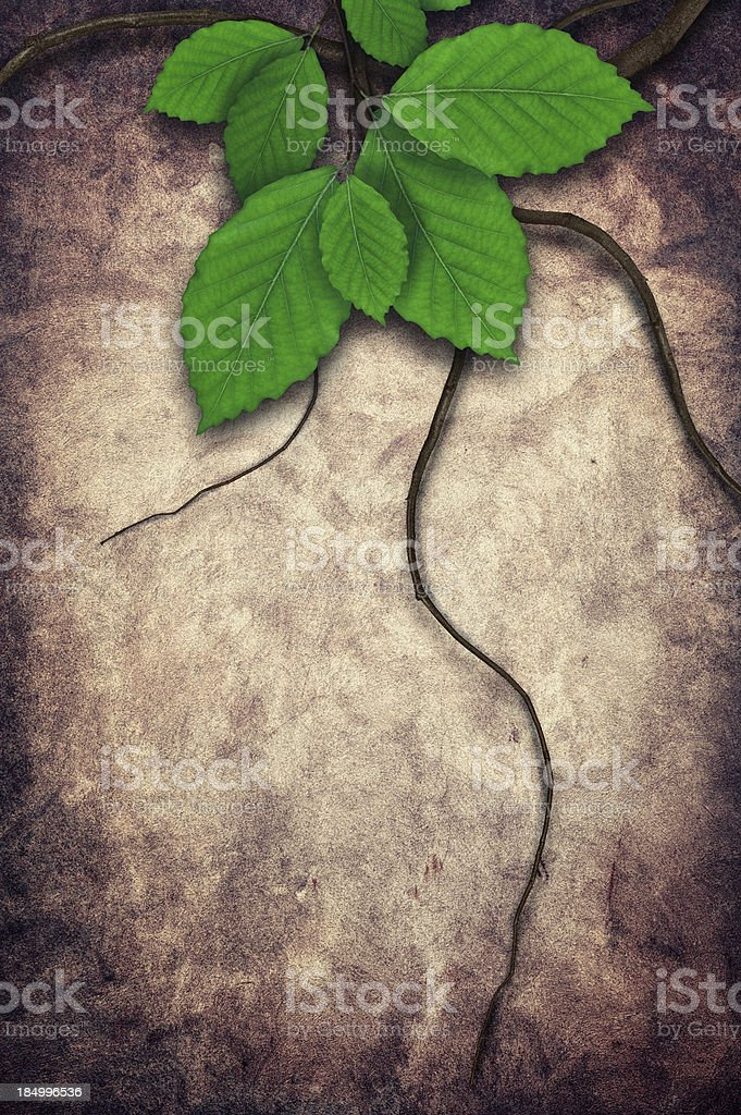 Grungy Spring Background royalty-free stock photo