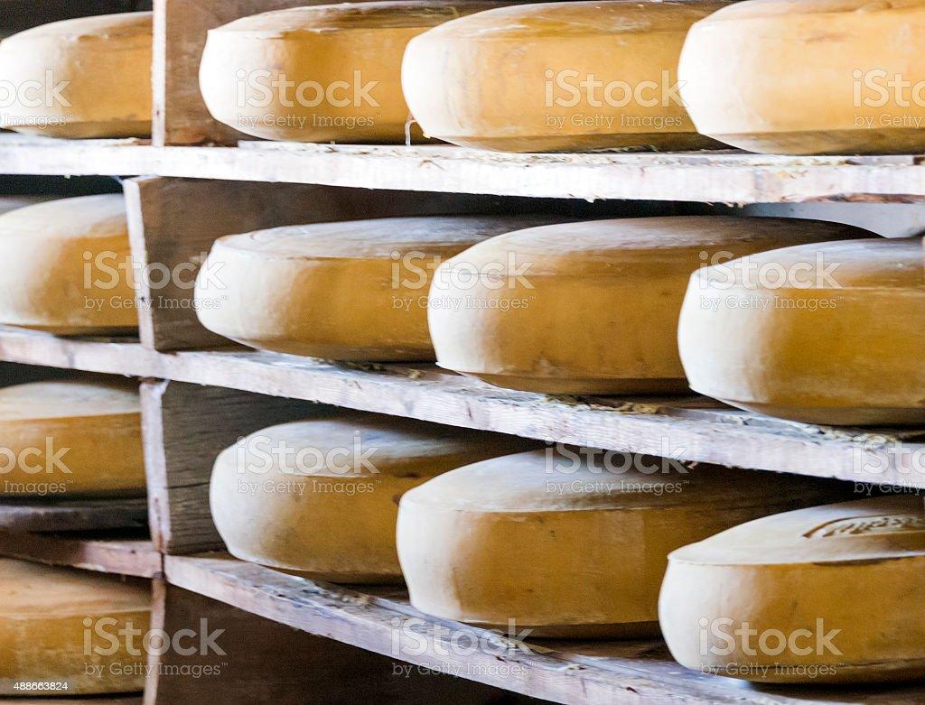 Gruyere Cheese Refining stock photo