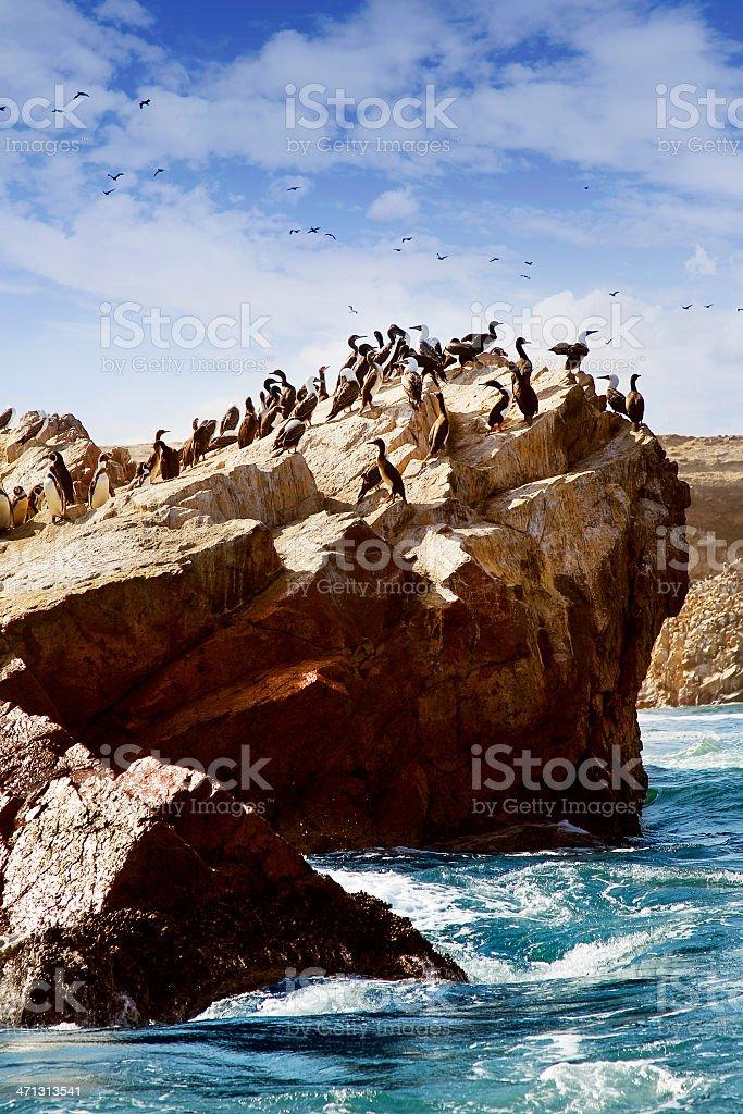 Guanay Cormorants and Humboldt Penguins - Ballestas Islands, Peru stock photo