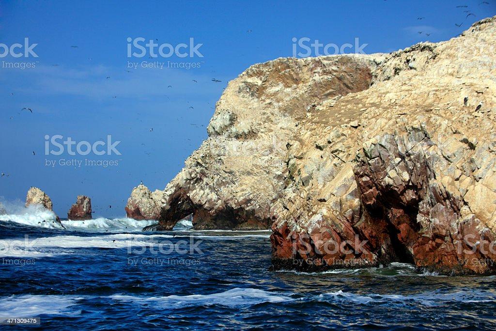 Guanay Cormorants - Ballestas Islands, Peru stock photo