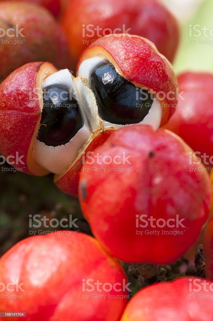 Guarana fruit resembling eyeballs royalty-free stock photo