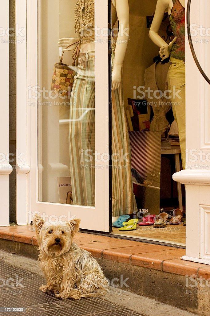 Guard dog,  Aix en Provence royalty-free stock photo