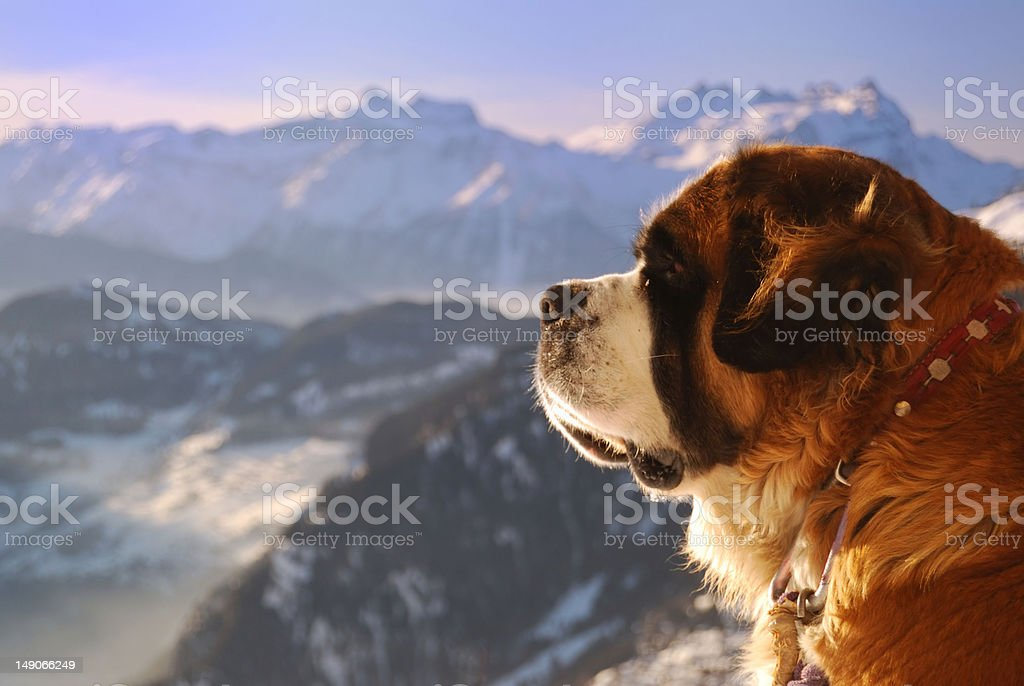 Guard of the Alps royalty-free stock photo
