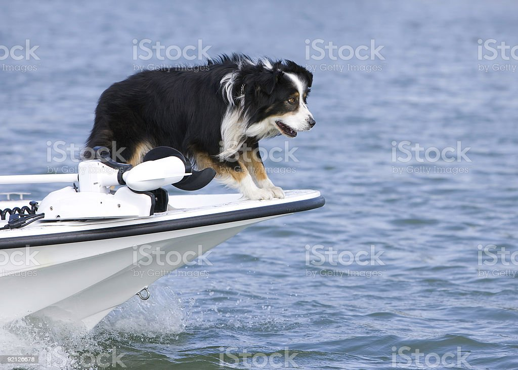 Guardian of the High Seas stock photo