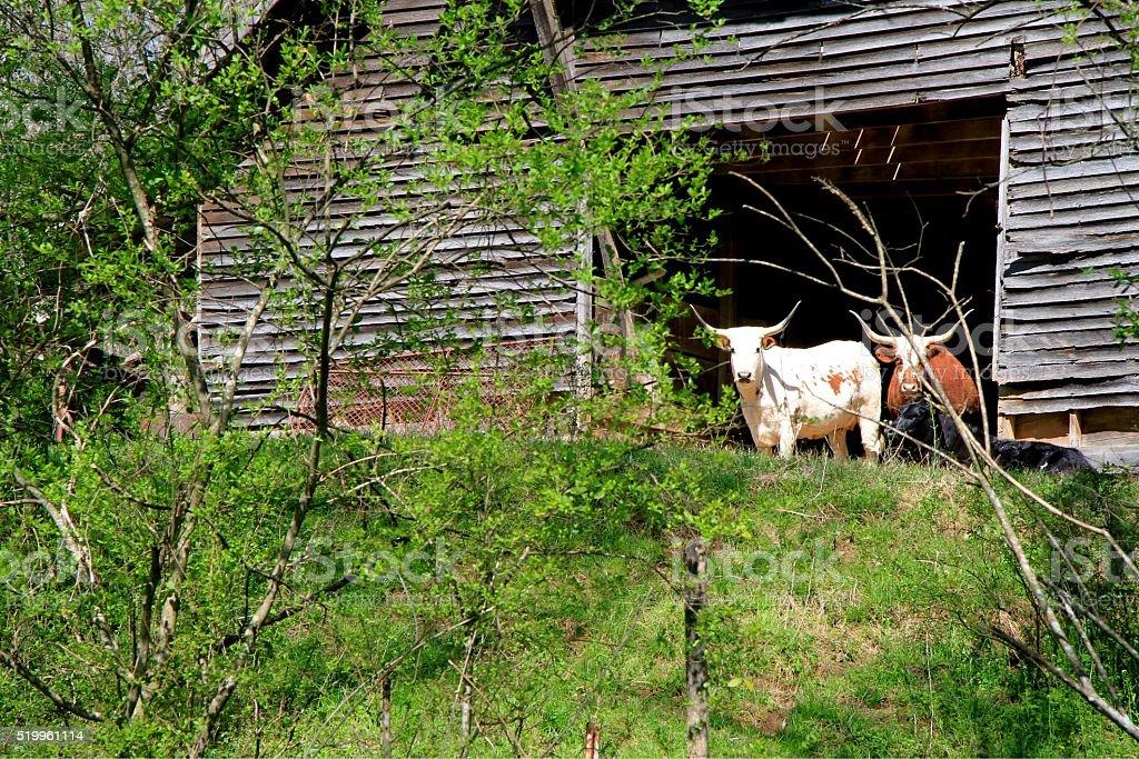 Guarding the barn stock photo