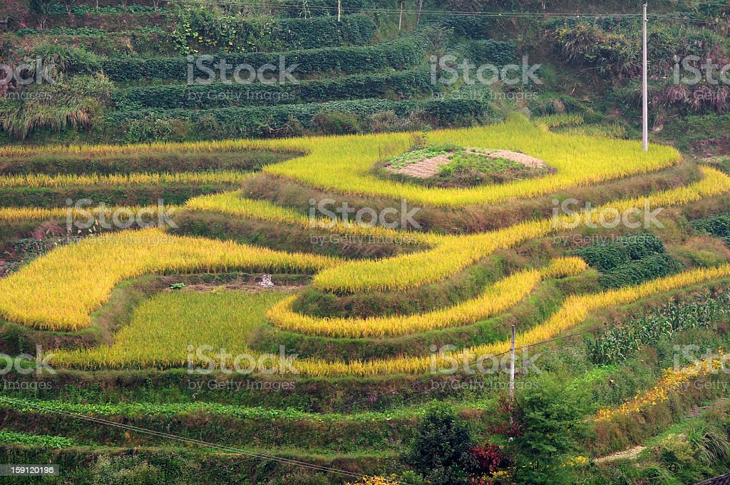 guilin Terraced royalty-free stock photo