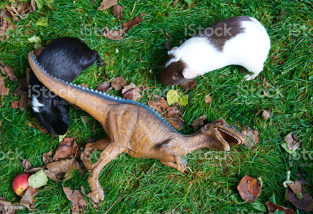 Guinea pig and dinosaur toy stock photo