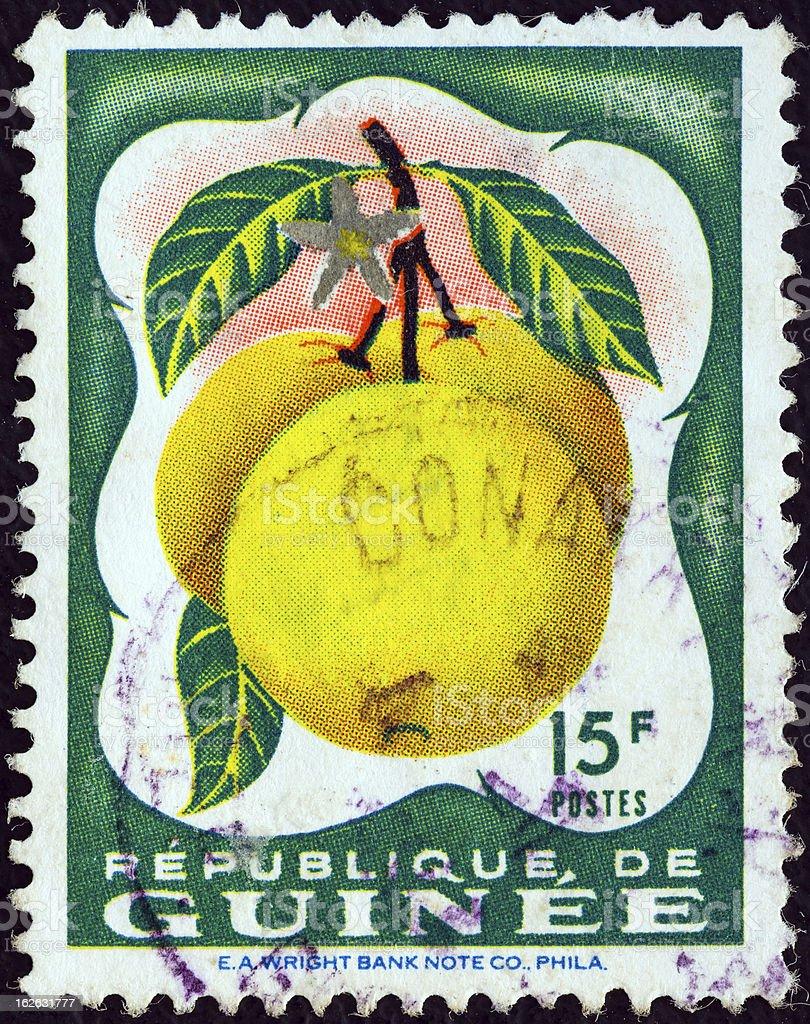 Guinean stamp shows Grapefruit (Citrus paradisi) (1959) royalty-free stock photo