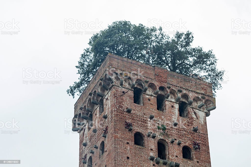 torre guingi in Lucca stock photo