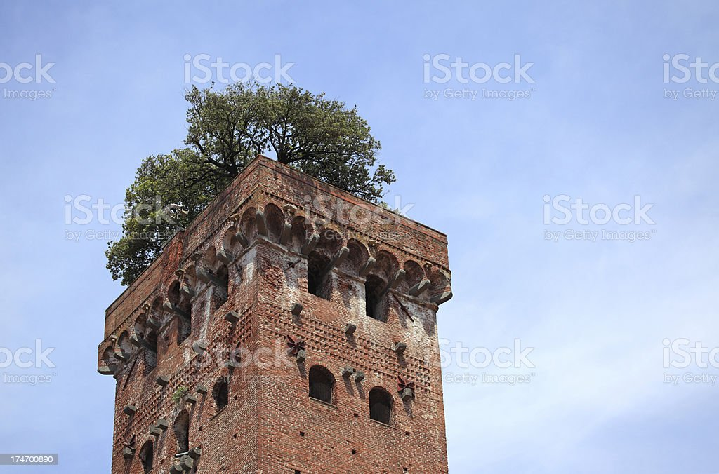 Guingi Tower in Lucca, Tuscany stock photo