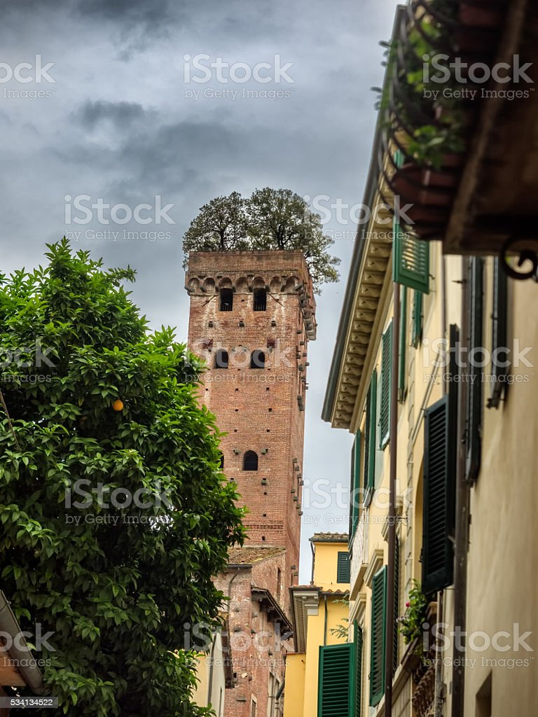 Guinigi tower with trees on the top in Lucca stock photo