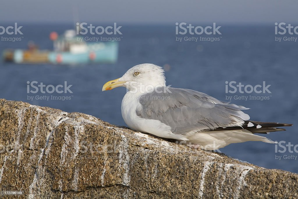 Gull and Fishing Boat stock photo