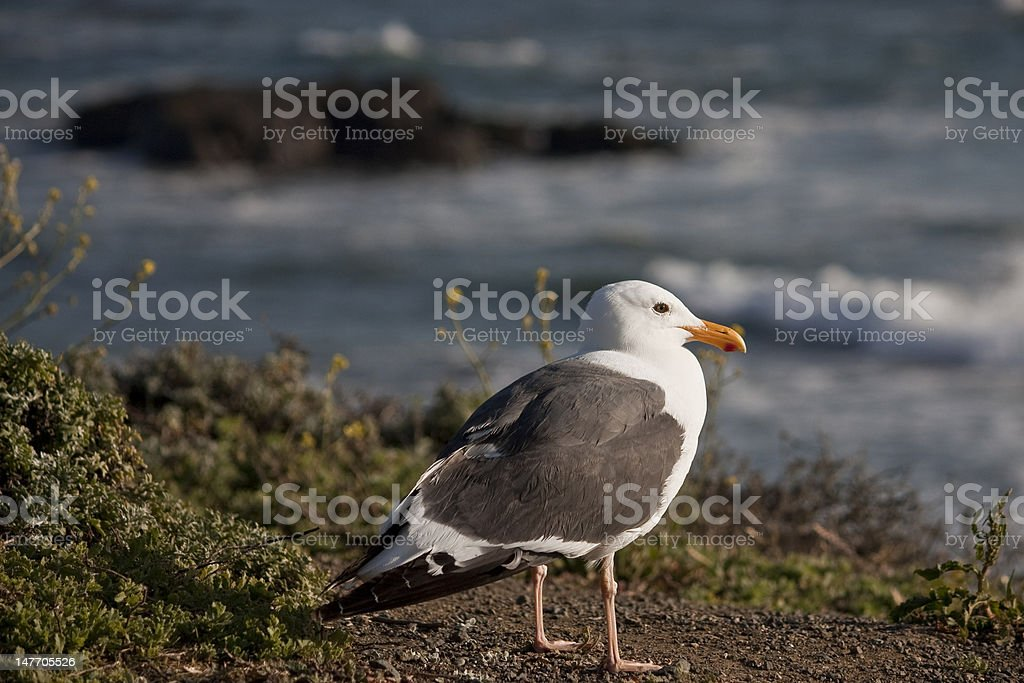 Gull by the sea stock photo