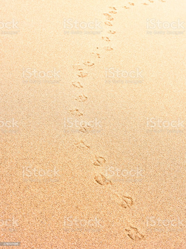 Gull footprint in the sand stock photo
