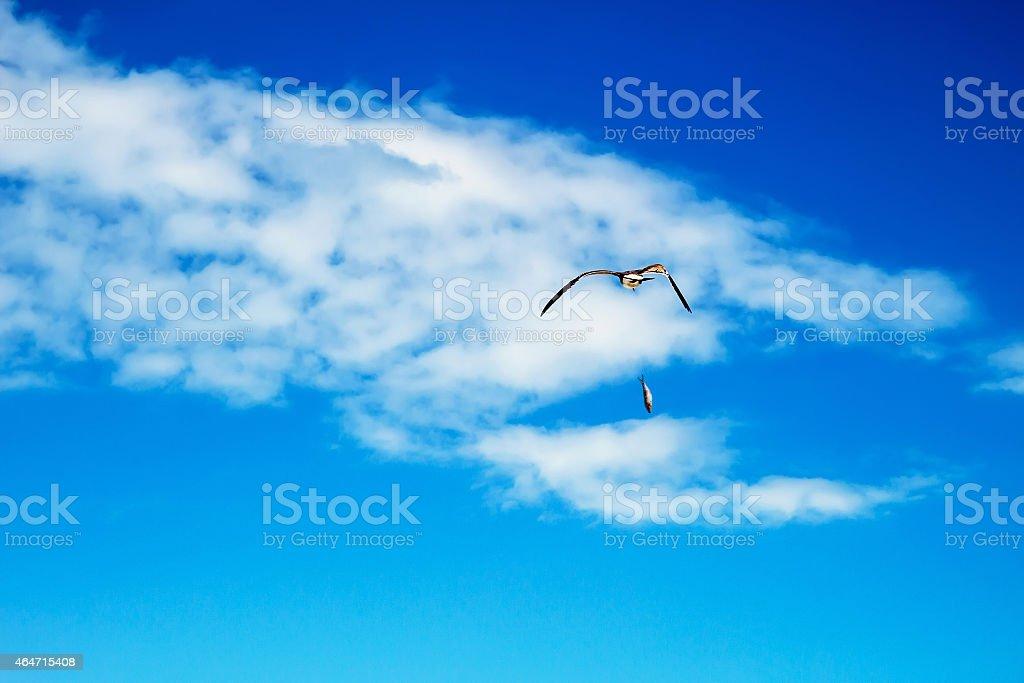 Gull has dropped a fish stock photo
