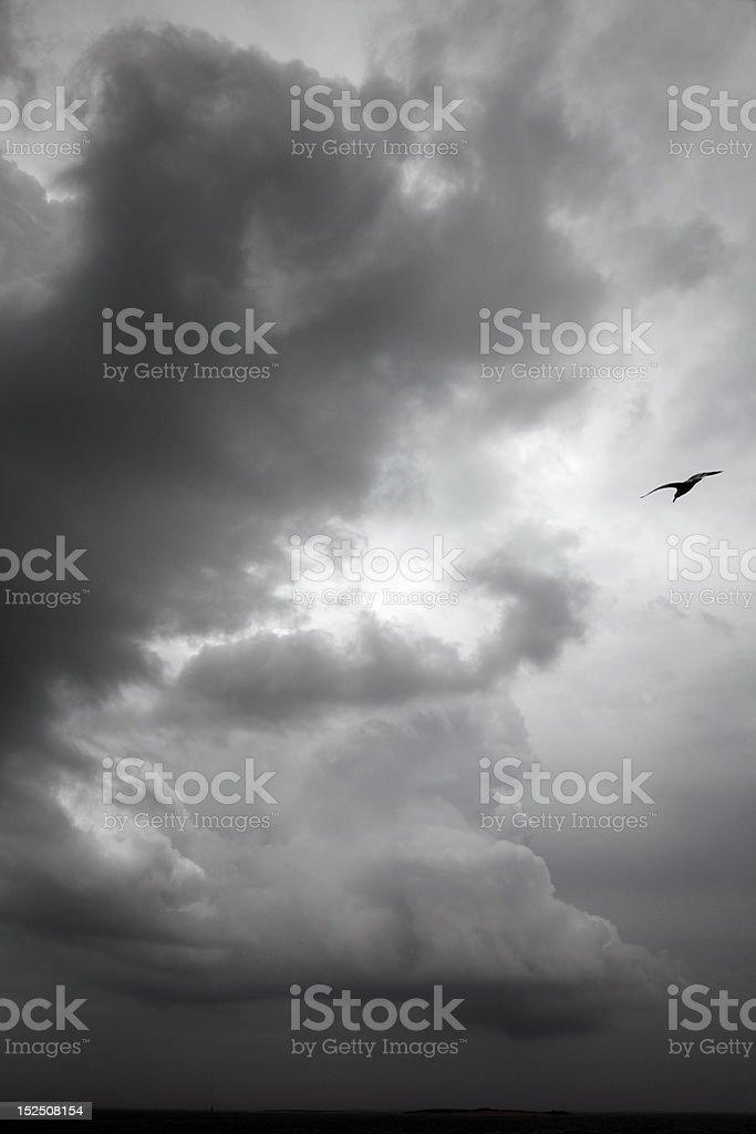 Gull in Storm, North Carolina royalty-free stock photo