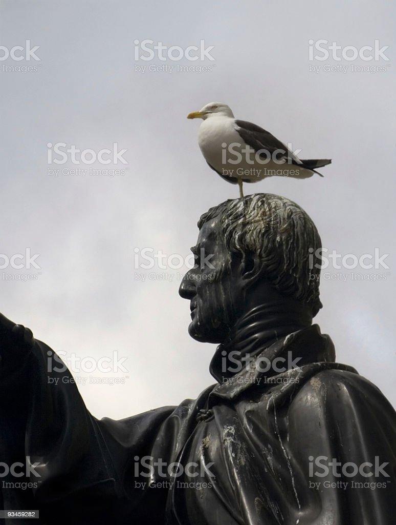 Gull on Duke of Wellington stock photo