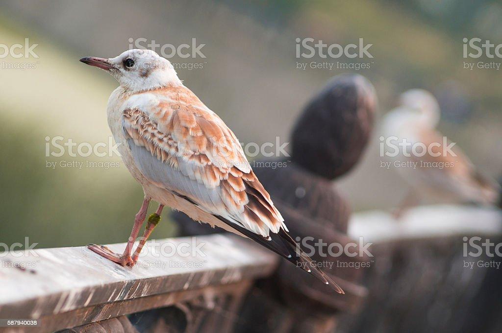 Gull on fence stock photo