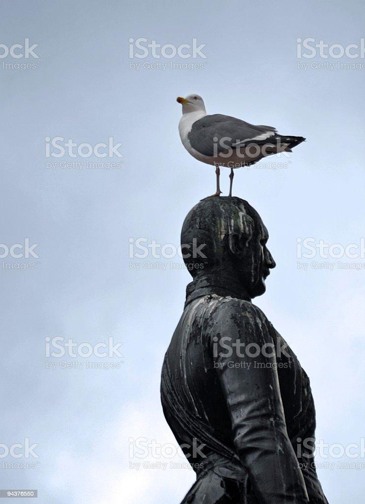 Gull on Prince Albert stock photo