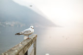 gull on the fence