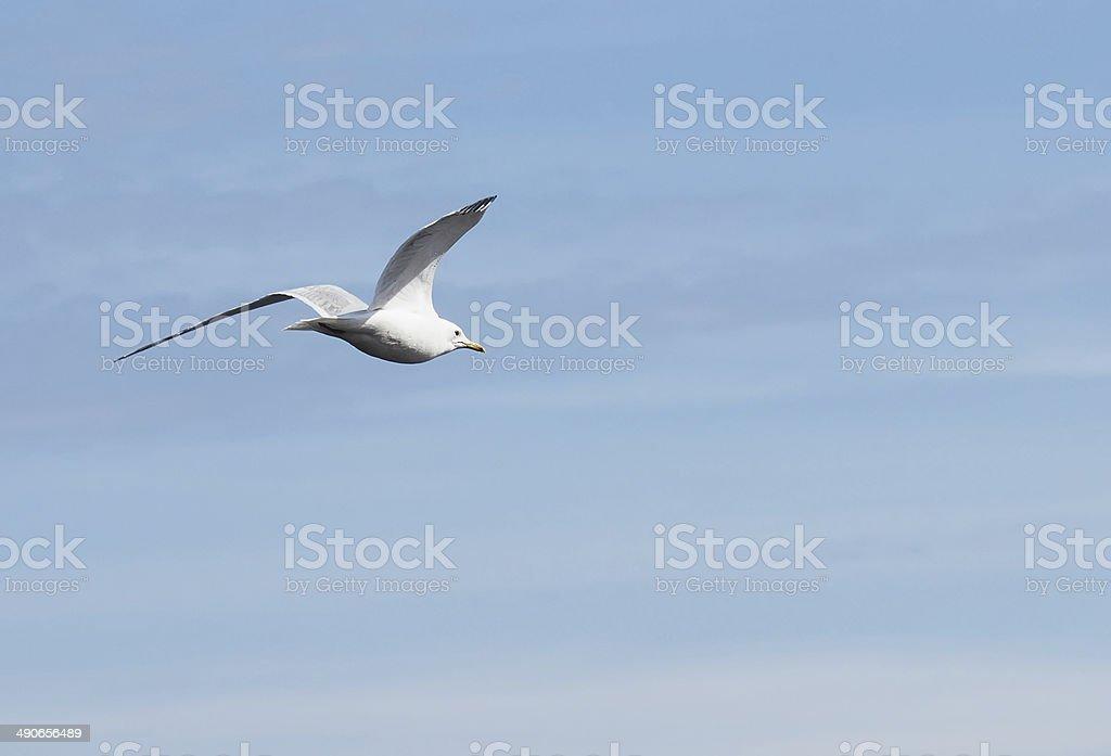 Gull on the lake stock photo