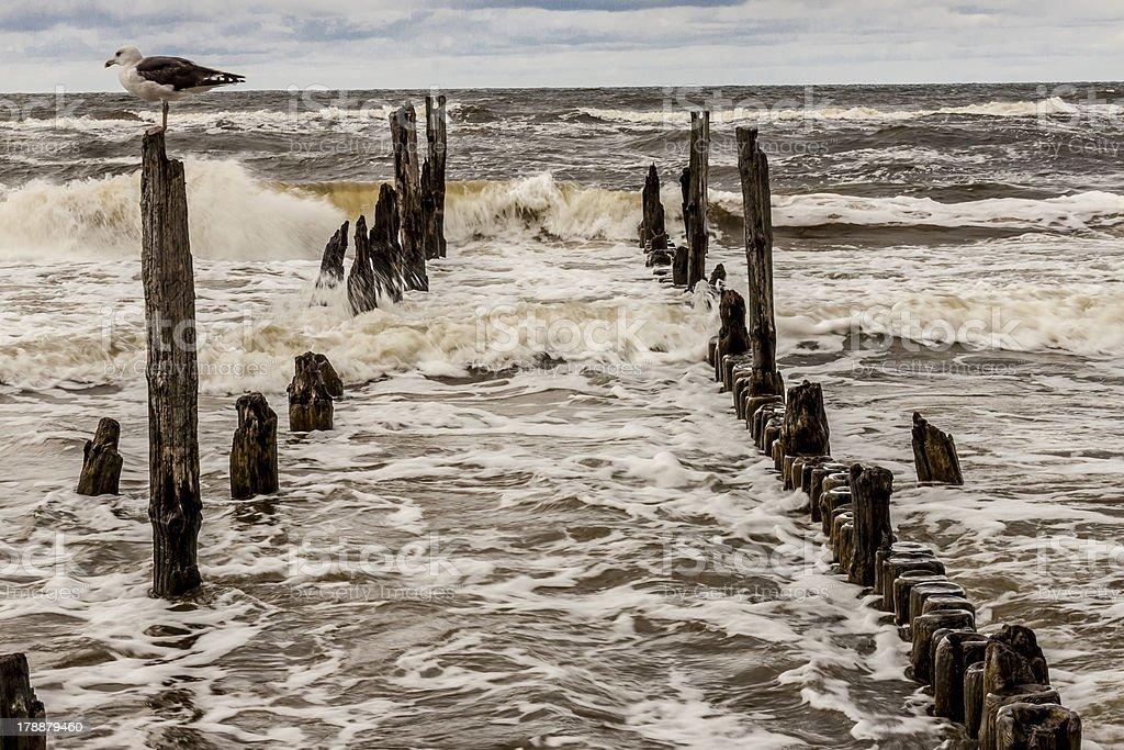Gull on wooden waterbreak - Rewal. stock photo