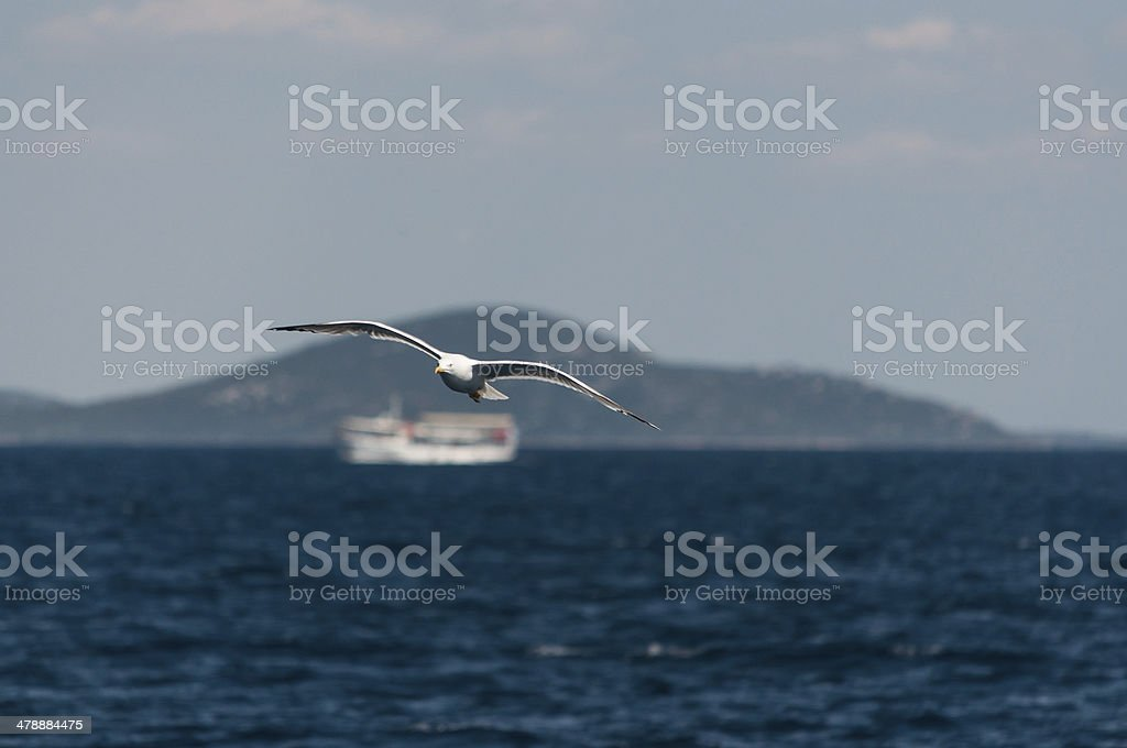 Gull over the sea royalty-free stock photo