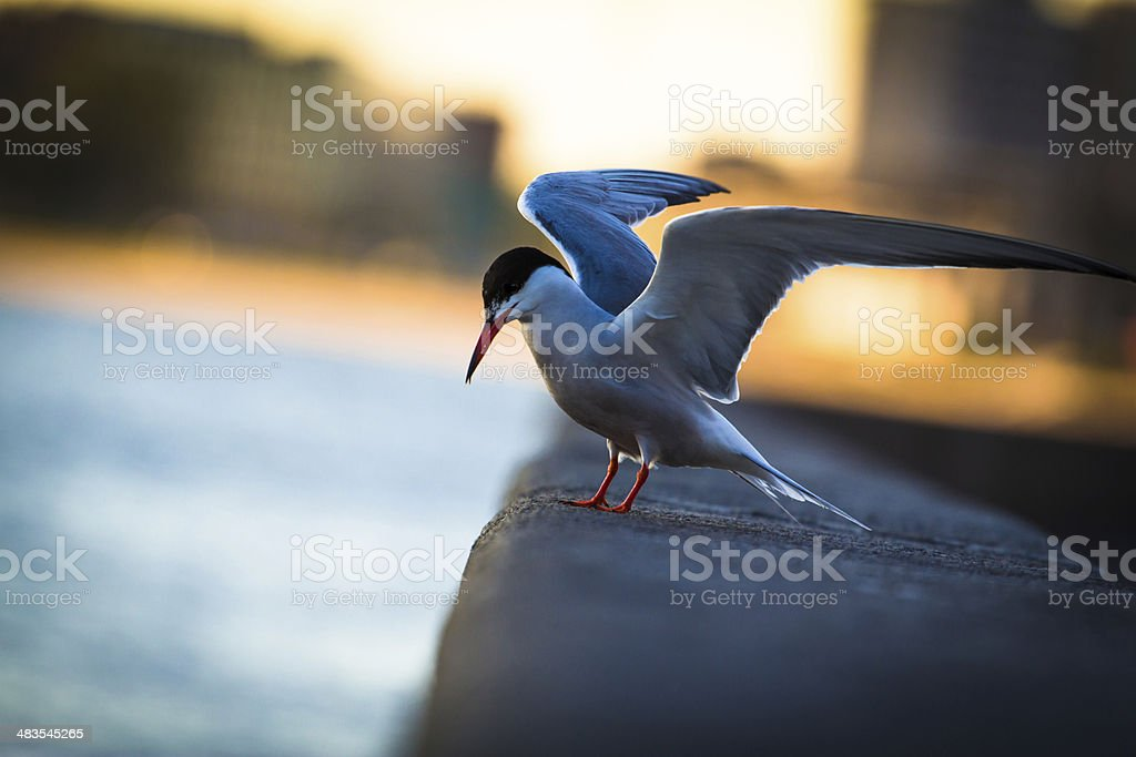 gull preys on the waterfront stock photo