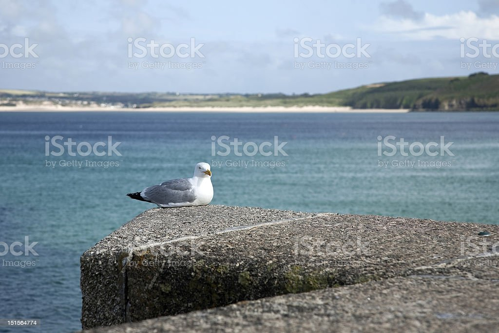 Gull resting on sea wall stock photo