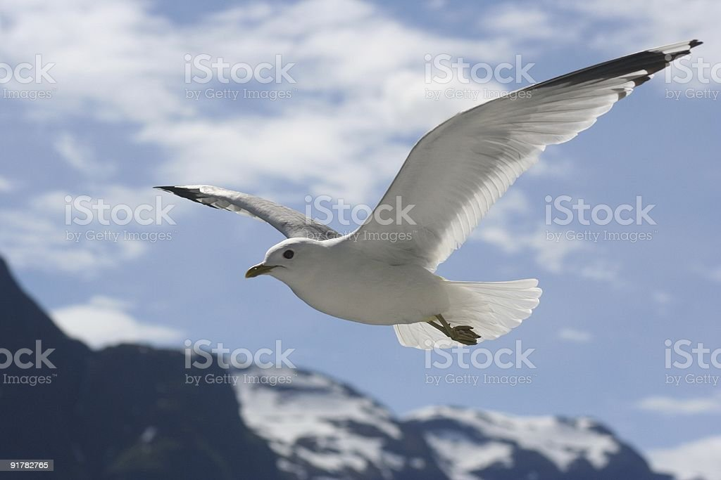 Gull soaring over mountains stock photo