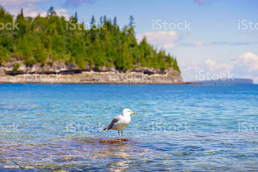 Gull with Unspoiled Great Lakes Landscape stock photo