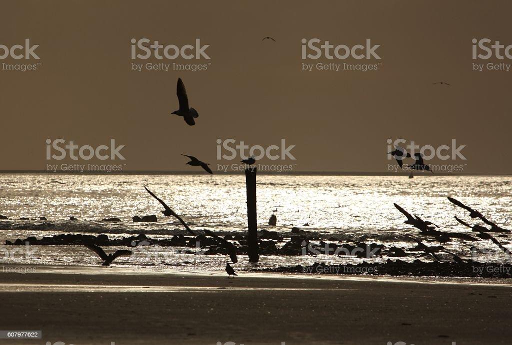 Gulls against sunset stock photo