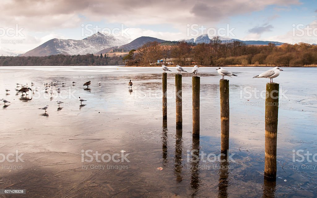 Gulls and Geese on frozen Derwent Water stock photo