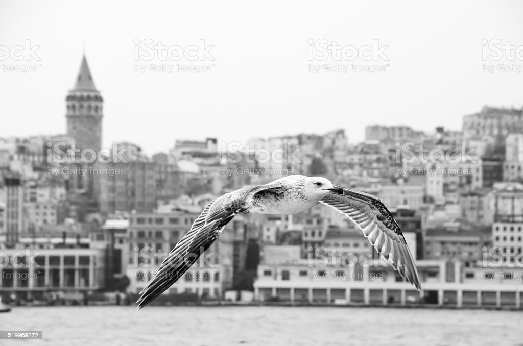 Gulls are the owners of İstanbul stock photo