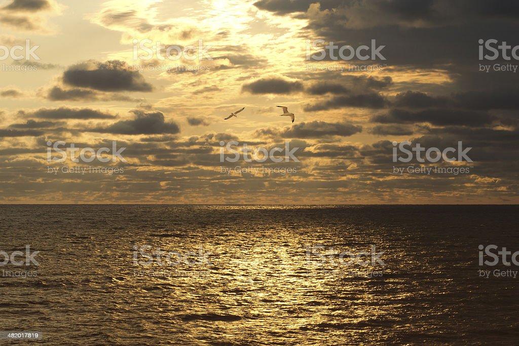 Gulls By The Horizon royalty-free stock photo