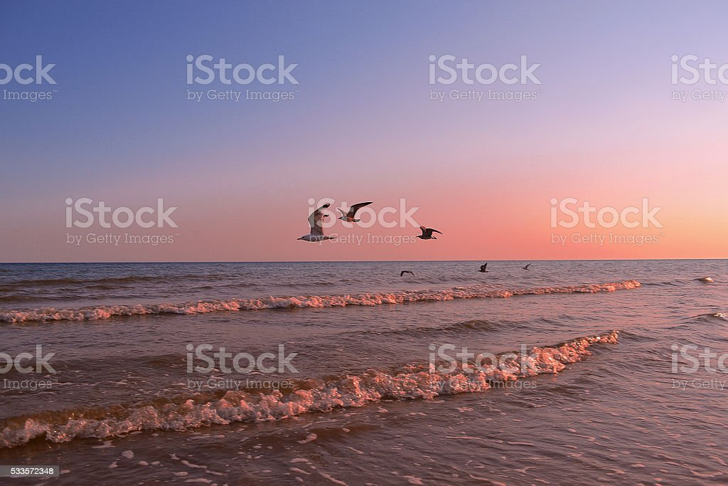 Gulls flying over the sea stock photo