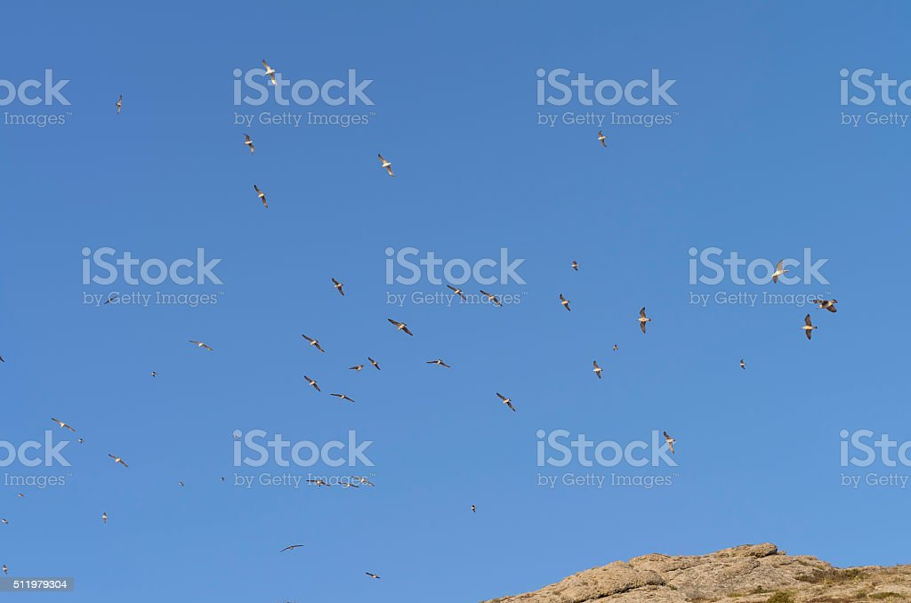 Gulls  in a blue  sky over the the mountain top. stock photo
