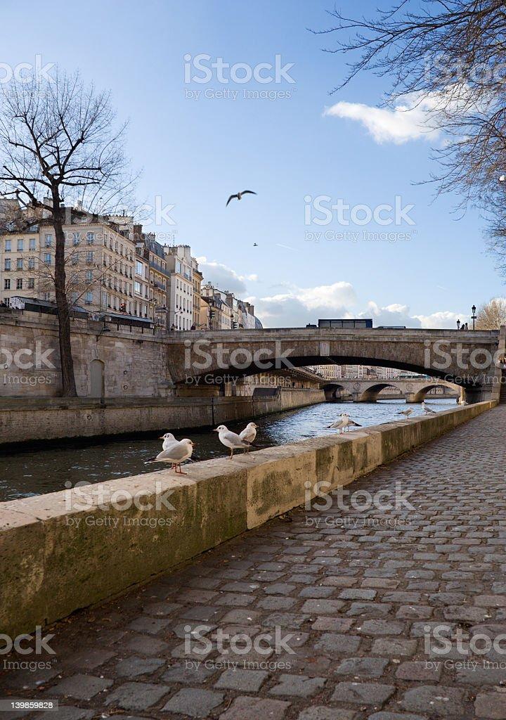Gulls en París foto de stock libre de derechos