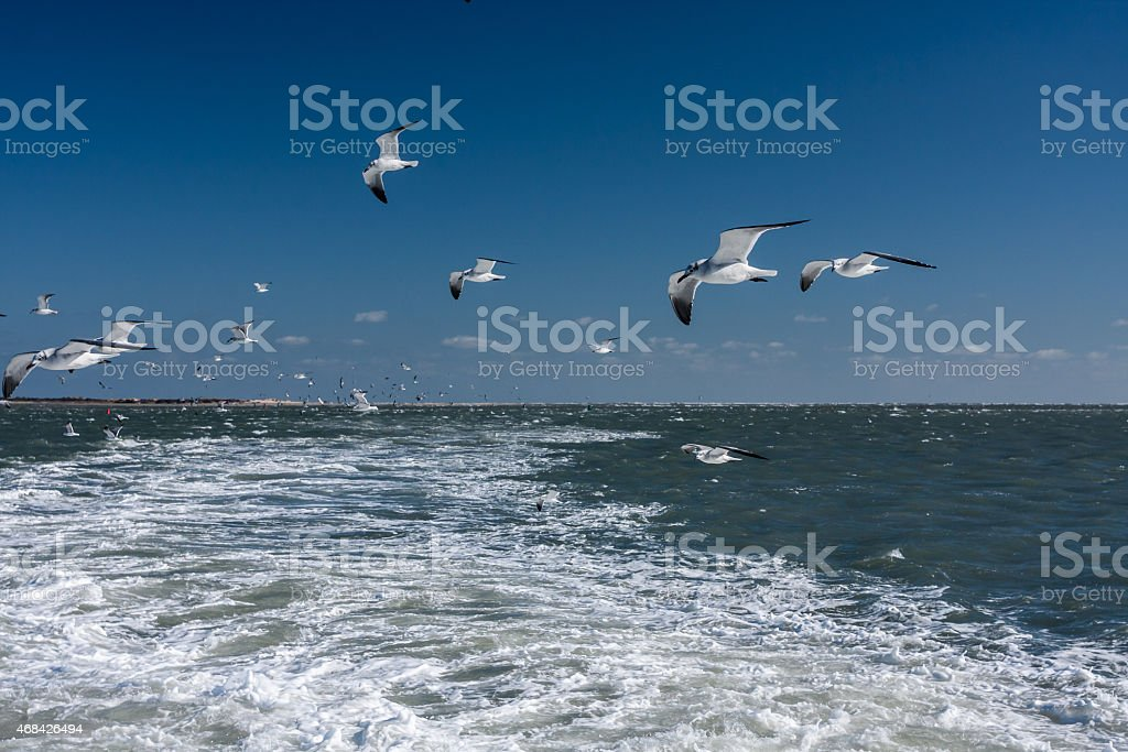 Gulls in Wake of Ferry stock photo