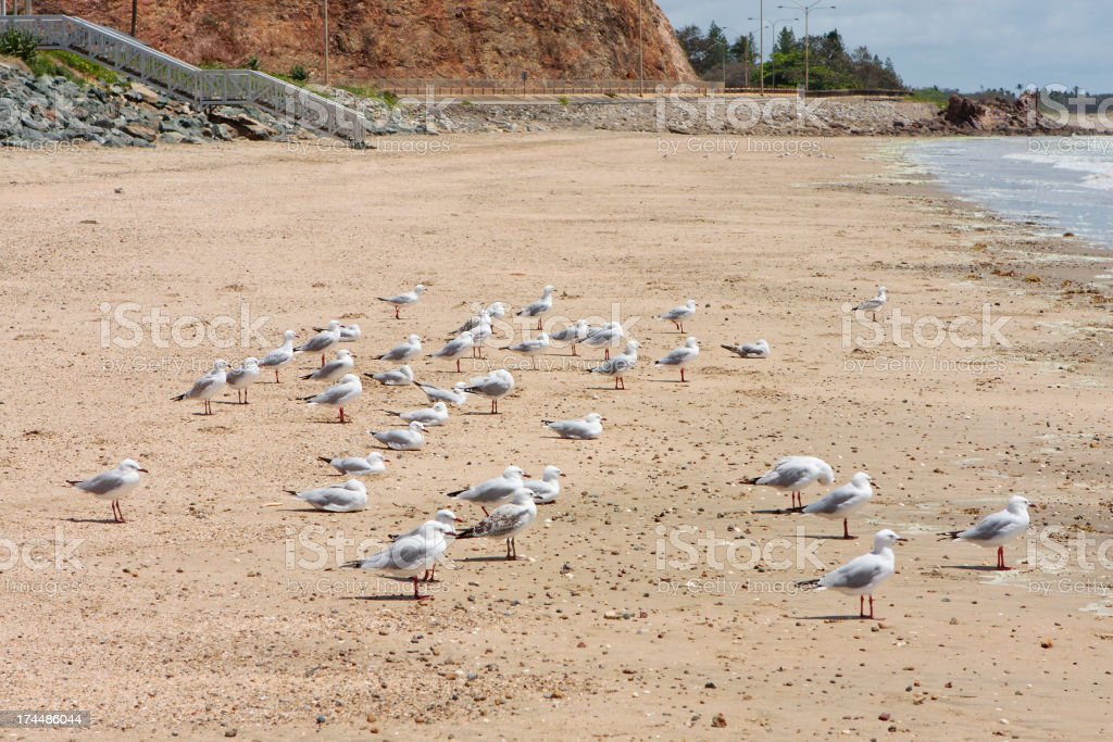 Gulls looking out to sea royalty-free stock photo