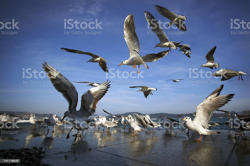 gulls on air stock photo