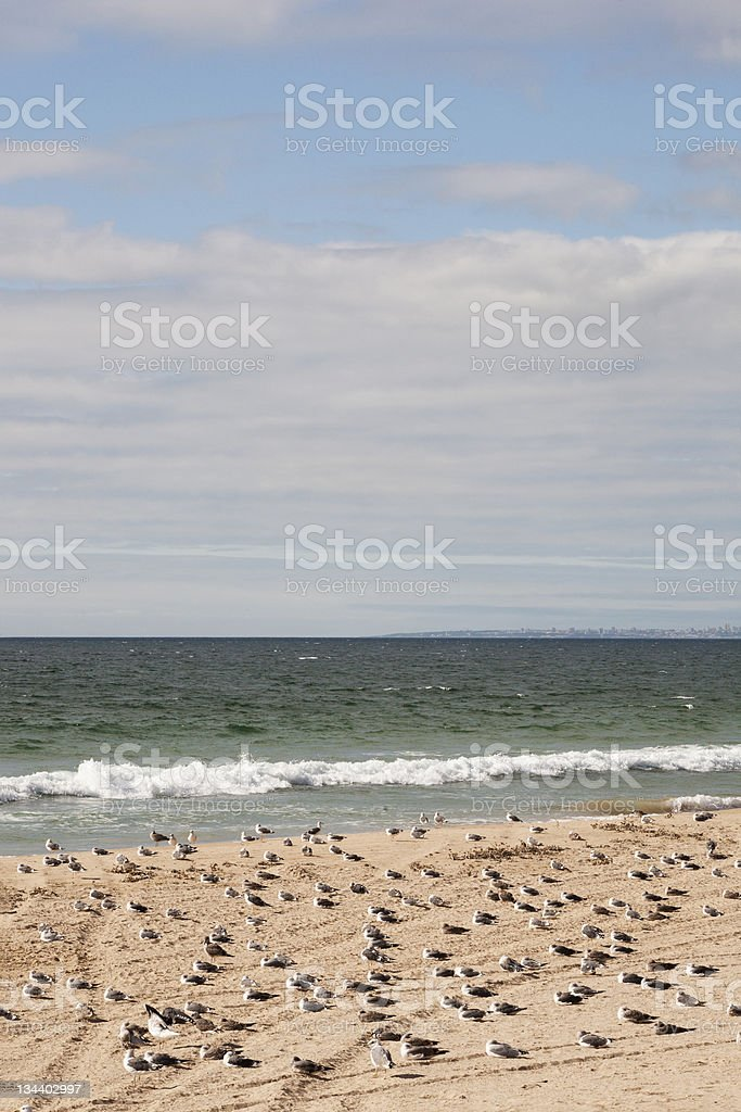 gulls resting by the beach stock photo