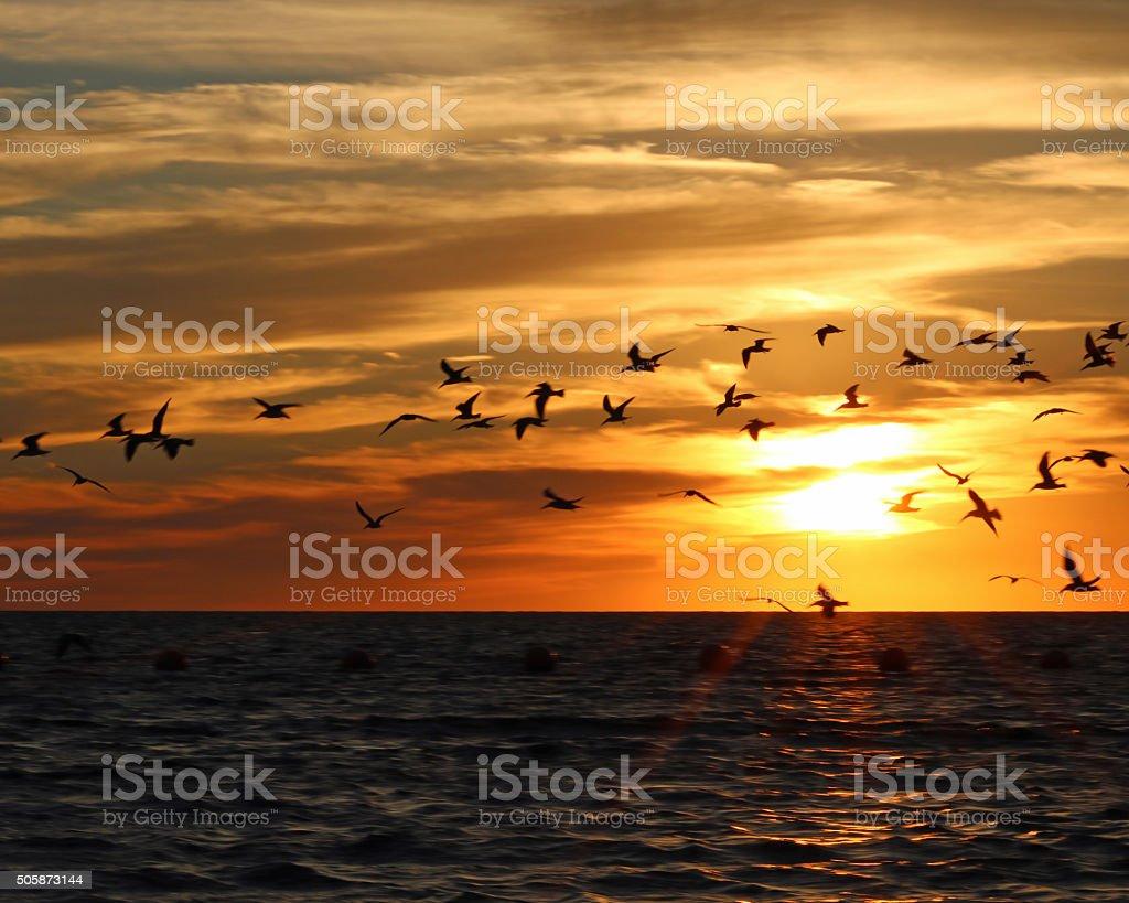 Vous y trouverez mouettes se dessinent sur un magnifique coucher de soleil sur l'océan photo libre de droits