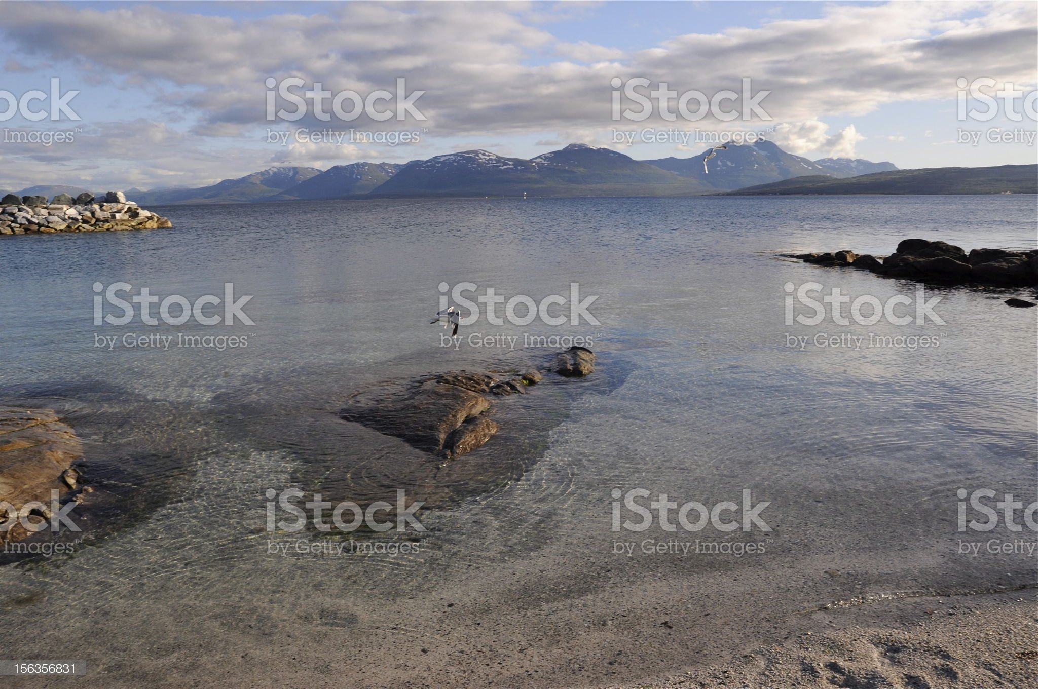 gullSea near Tromso royalty-free stock photo