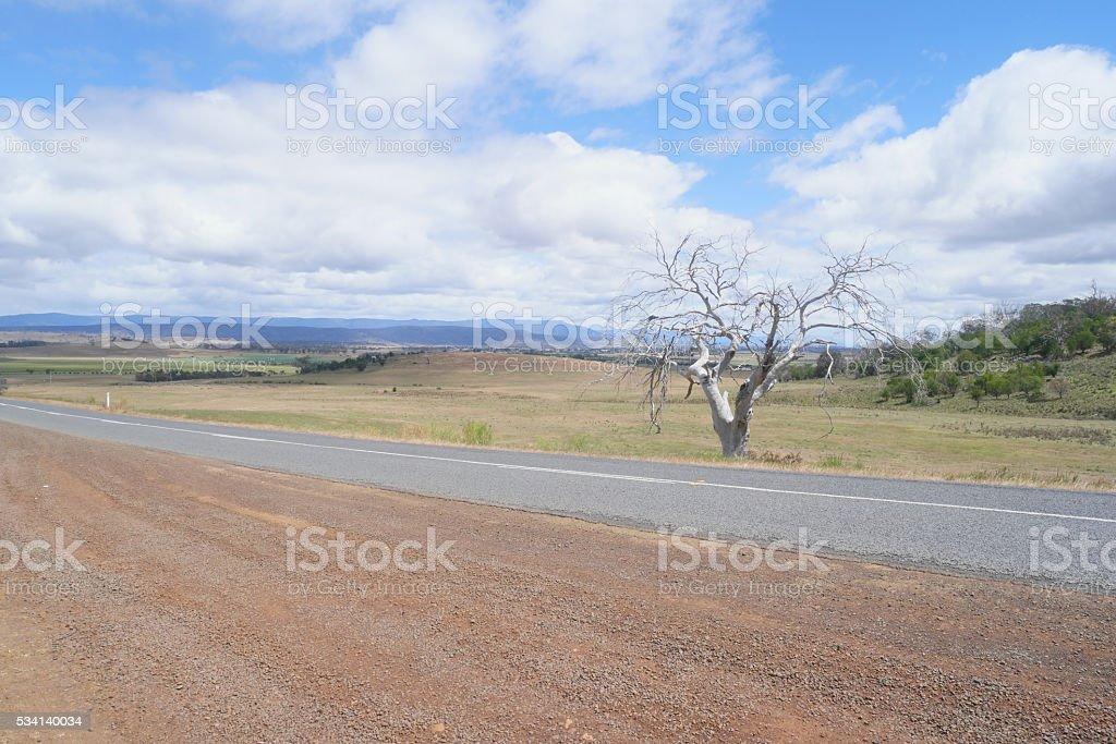 gum tree landscape stock photo